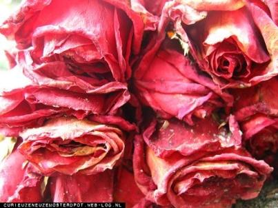 roos0zn.jpg